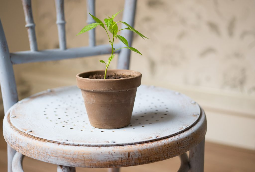 Growing plant illustrates scaling a business